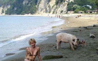Свинья на пляже