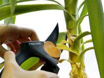 Обрезаем комнатные растения