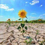 Технологии в сельском хозяйстве для борьбы с засухой